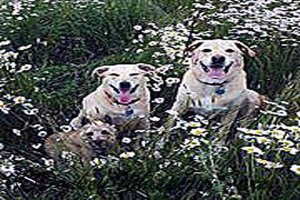 dogsindaisys2014MAY25_edited-1