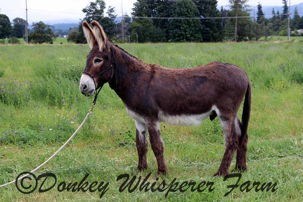 Farm donkeys - photo#28