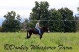 rioridejuly192014farmsequimmammothdonkey