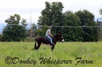 World-Wide Virtual Donkey, Horse and Mule Training – I Am Now Accepting New Students