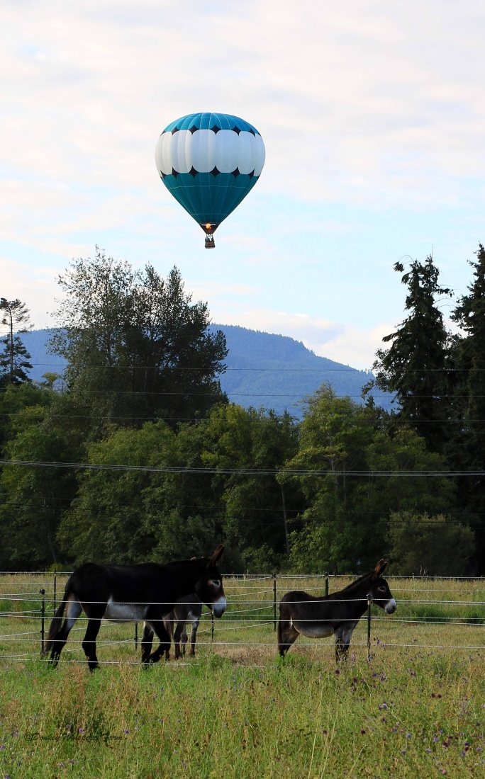 Balloonfirerideoverfarm2014labordayweemend