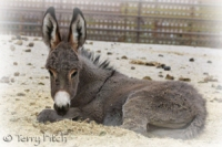Where will our wild horses and burros be goingnow?