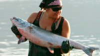 Large number of salmon return to Columbia River