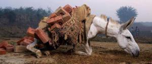 donkey-abuse