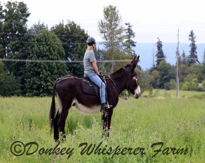 Rio the mammoth donkey and Melody bitless riding