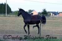 Falling In Love/Training Another Horse And Four MoreDonkeys