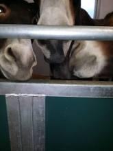 Fall On The Donkey Whisperer Farm2014