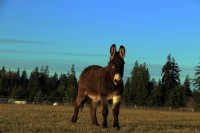 Wellness Check Vet Spring Shots On The Donkey Whisperer Farm 2015