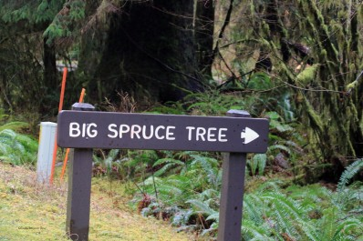 bigsprucetreesign