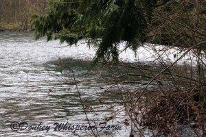 dungenesssriverirrigationfarmseq2014march