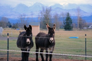 Tuba and OBOE rescue donkeys