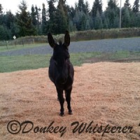 Take Action To Donkey Roping
