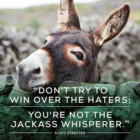 donkeywhispererfarm