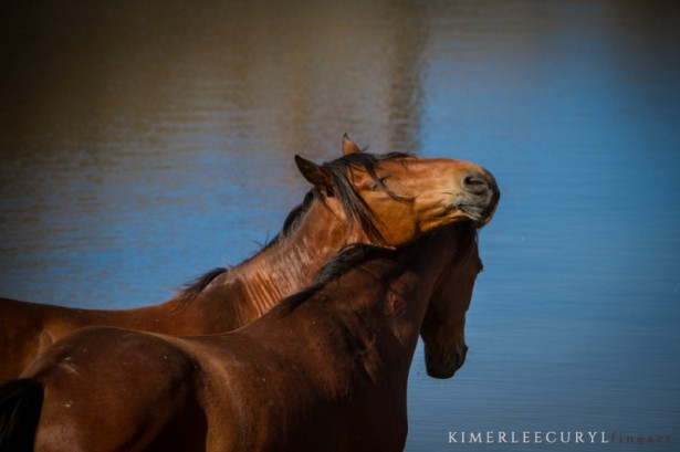 waterforwildhorses