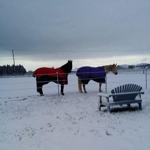 mares snow