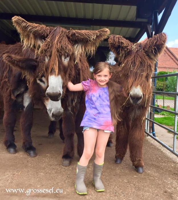 donkey potoui