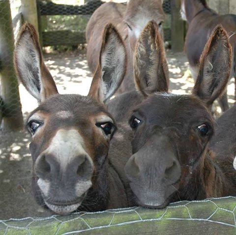 CUTEDONKEYS