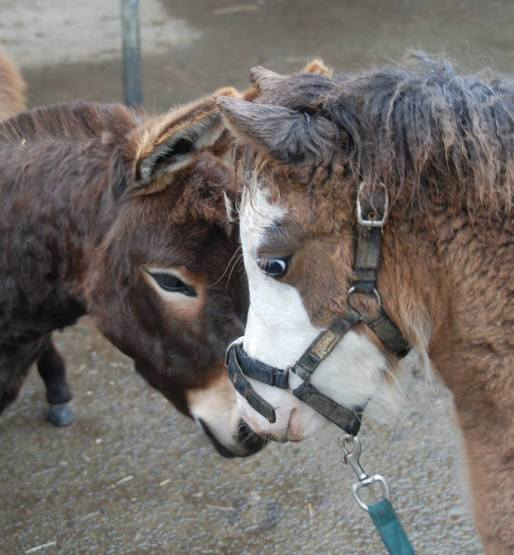 horsedonkey