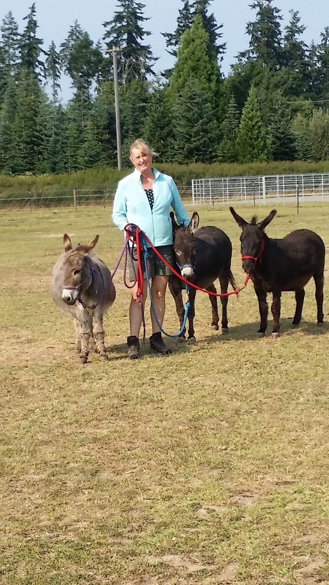 Farm donkeys - photo#26