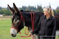 Dreams Do Come True, Donkey Rope Halters Are SellingFast