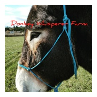 Donkey Whisperer Farm – DONKEY ROPE HALTER FOR SALE, NOT A HORSE HALTER