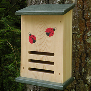 ladybug1house