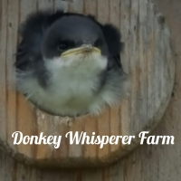 My little flower garden, baby birds along withHay