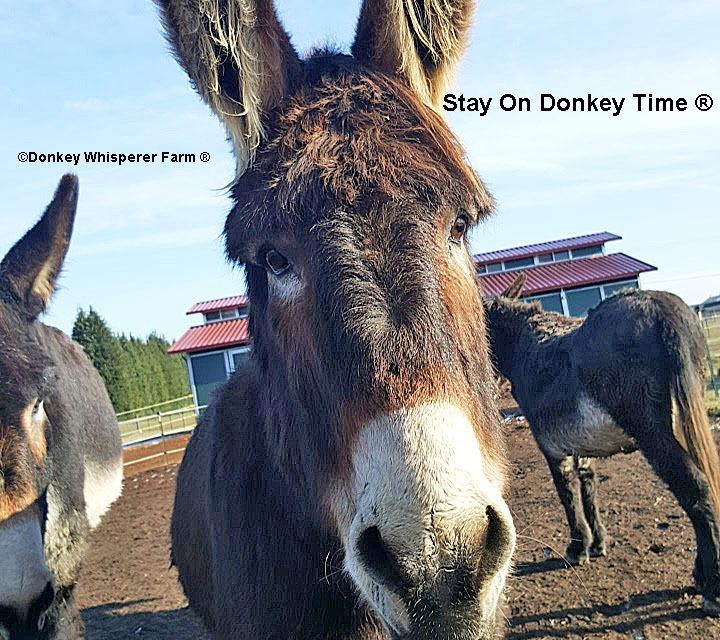 Donkey Whisperer Farm Donkey Education Donkey Training Video Donkey
