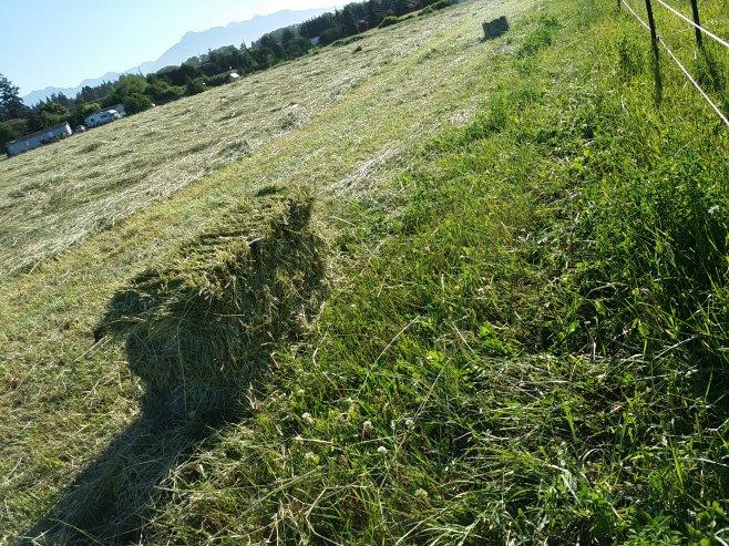 original1.hay