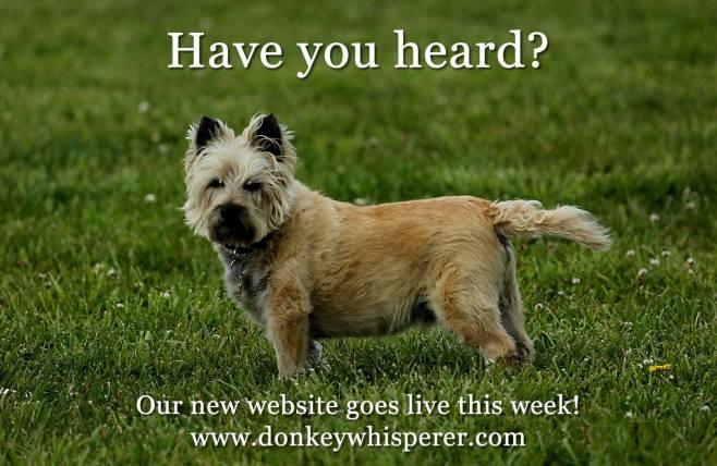donkeydog