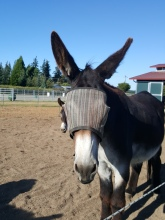 August On The Donkey Whisperer Farm