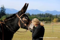 Training The Owner To Train The Donkey