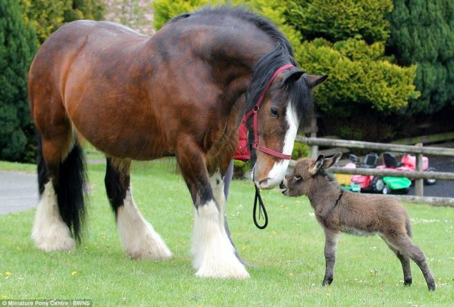 donkeyhorse15168911_1416126338405109_1866109745270660602_o