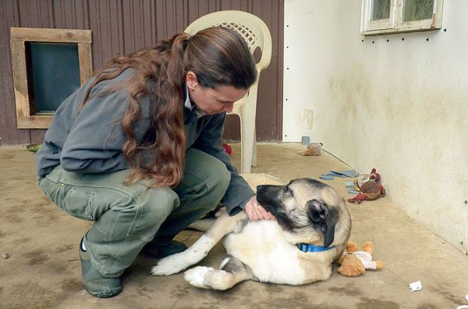 saraweb1_161124-pdn-animal-rescue-grant-web-640x4242x