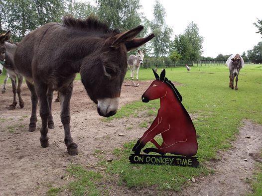 on-donkey-time