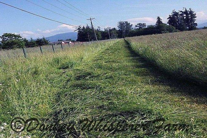 hay-cut2014june