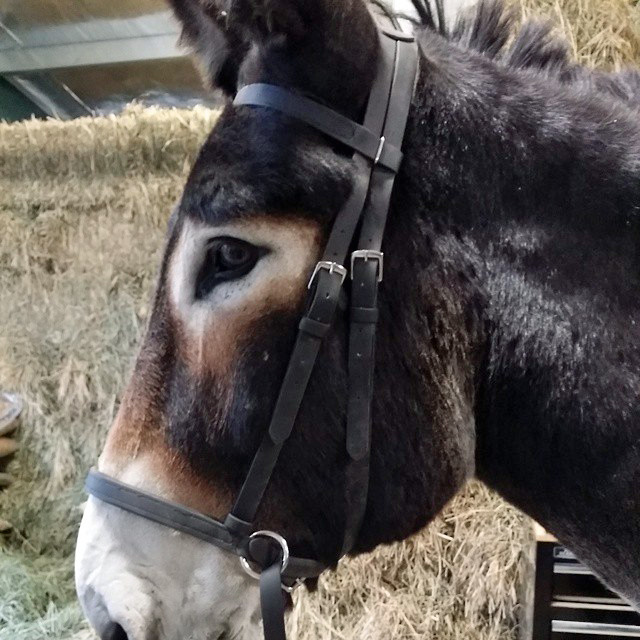 riobittlessbridle