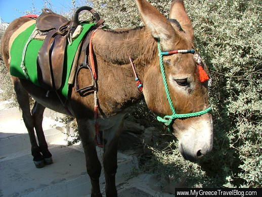 a-donkey-on-a-path-in-firostefani-village-on-santorini-dscf1042