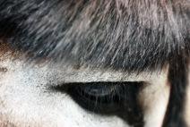 eyespring2012rioage6_edited-1