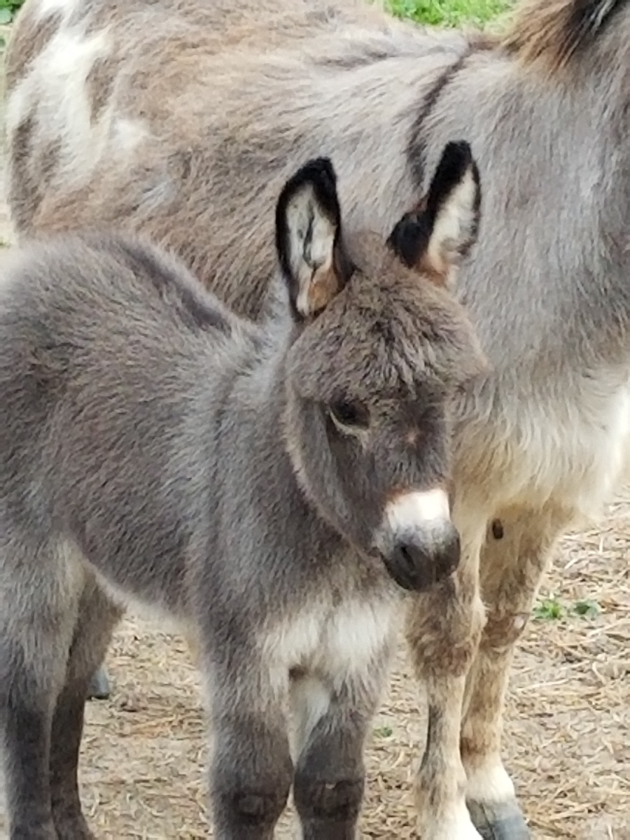 Five Questions You Must Ask Your Vet Before Sedation, Gelding Or Teeth - Save A Donkeys Life