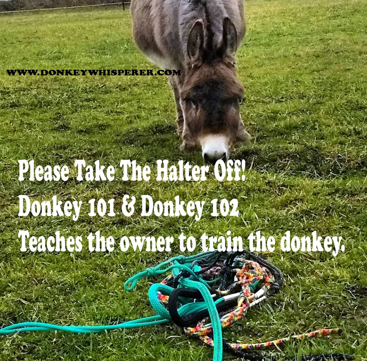 "TRAINING TOOL FOR DONKEYS ""ON DONKEY TIME ™ "" PICK UP THE FEET NO KICK"