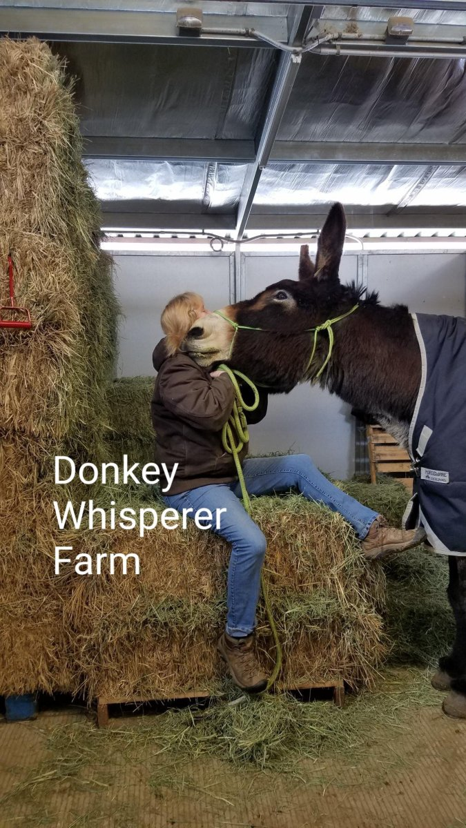 Donkey Basketball Is Wrong - Why Do People Laugh?