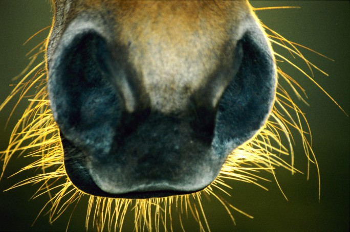 whiskers-684x454