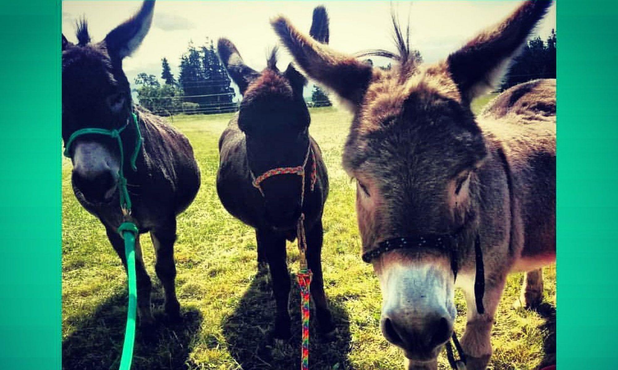 Donkey Whisperer Farm ®